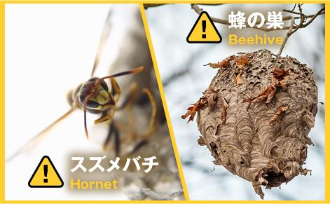 シロアリ・スズメバチ・害虫駆除